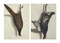 a trompe l'oeil of a hanging pheasant (+ a trompe l'oeil of a hanging black grouse; pair) by cornelis (bilcius) biltius