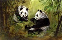 pandas eating bamboo shoots by peter swan-brown