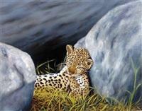 bébé léopard fatigué by marc colombi