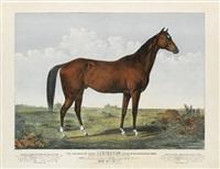 the celebrated horse
