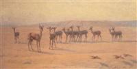 springbok by john charles dollman