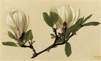 magnolea soulangeana by raymond booth