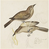 ornithological studies (portfolio of 87, various sizes) by heinrich gottlieb reichenbach