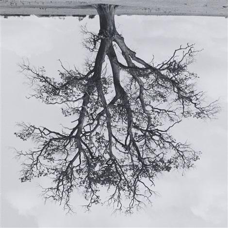 oxfordshire oak banford fall by rodney graham