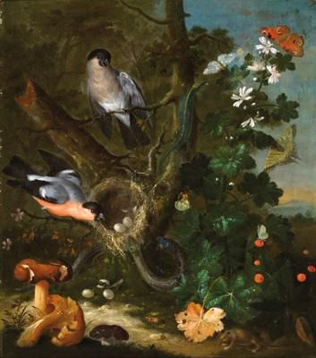 stillleben mit vögeln und pilzen by johann baptist halszel