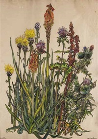 wiesenblumen by julius hüther