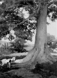 goats under a shade tree by walter dean goldbeck