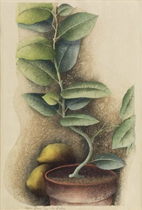 ida's lemon tree by luigi rist