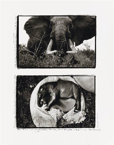 charging bull elephant and elephant embryo uganda diptych by peter beard