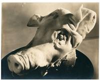 tête de cochon by mehemed fehmy (dr.) agha