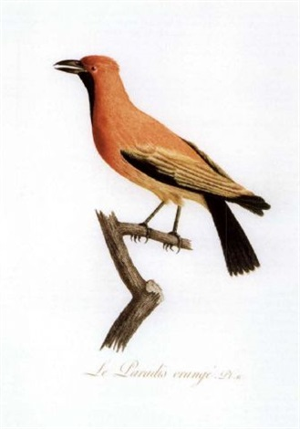 oiseaux dorées ou à reflets métalliques by jean baptiste audebert