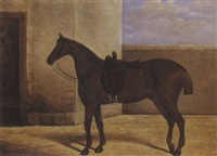 horse in a yard by j. fifield