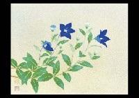 bellflower by okazaki tadao