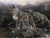 snow leopards by matthew hillier