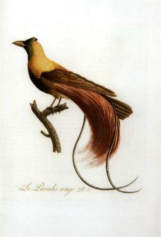 oiseaux dorés ou à reflets métalliques by jean baptiste audebert
