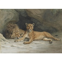 lions resting outside the den by evert louis van muyden