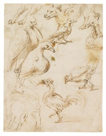 double sided sheet of studies of birds and animals by frans snyders