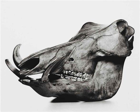 warthog (neg. 2a) by irving penn