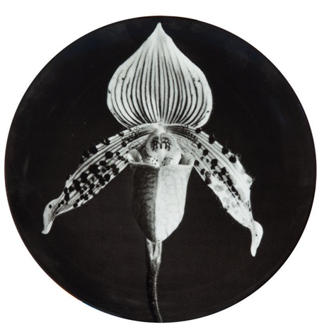 orchid and calla lily plates (set of 2) by robert mapplethorpe