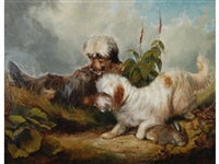 two skye terriers with a hare, in undergrowth by thomas william earl