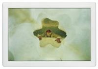 cremaster 4: loughton head by matthew barney