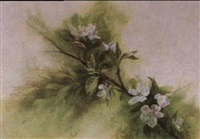 apple blossoms by mitch billis