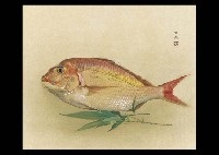bream with the bamboo grass by daijo aoki