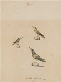 study of three birds by camilla gandolfi