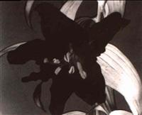 fleurs by yoshi okamoto