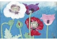 opium poppy by sai morita