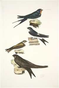 common swallow, house martin, sand martin & swift, pl. 42 (from british ornithology, land birds vol. 1) by prideaux john selby