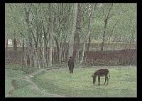 green kashmir landscape by shinsuke yoshihara