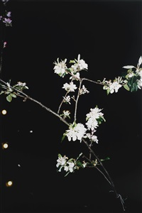 apple tree (a) by wolfgang tillmans