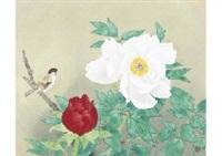 peony by junichi goto