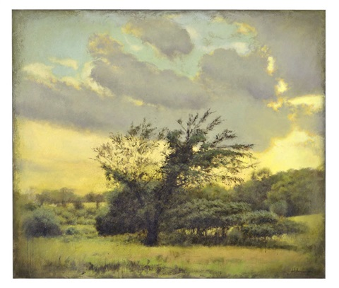 july evening small tree with missing limb by laurence hofmann