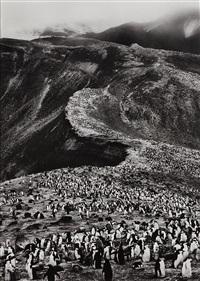 chinstrap penguins (pygoscelis antarctica), deception island, antarctica by sebastião salgado