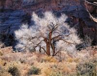 cottonwood and light, utah by christopher burkett