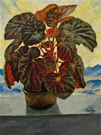 pflanzenstillleben by johannes hepperger