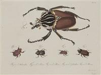 natursystem aller bekannten in- und ausländischen insekten. der käfer (10 vols. w/194 works) by carl gustav jablonsky and johann friedrich wilhelm herbst
