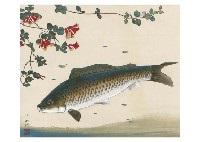 carp by hitoshi komatsu