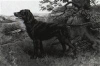 irish setter by richard newton ii