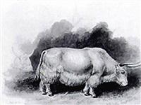bos gruniens yak by robert kretschmer