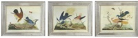 birds (+ 2 others; set of 3; after carlo antonio rainieri) by vittorio raineri