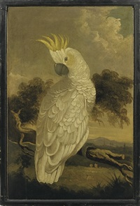 cockatoo by australian school (19)