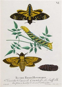 a natural history of english insects (bk w/100 works) (engraved by vander gucht, hullet, and terasson) by eleazar albin