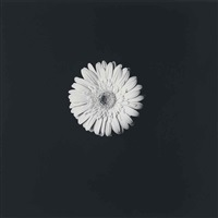 flower by robert mapplethorpe