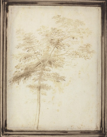 a tree (study) by fra bartolommeo