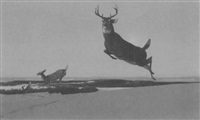 leaping stag by douglas allen
