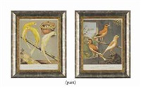 untitled (from cassell's canaries and cage birds; 18 works) by british school (19)