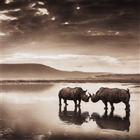 rhinos on lake by nick brandt